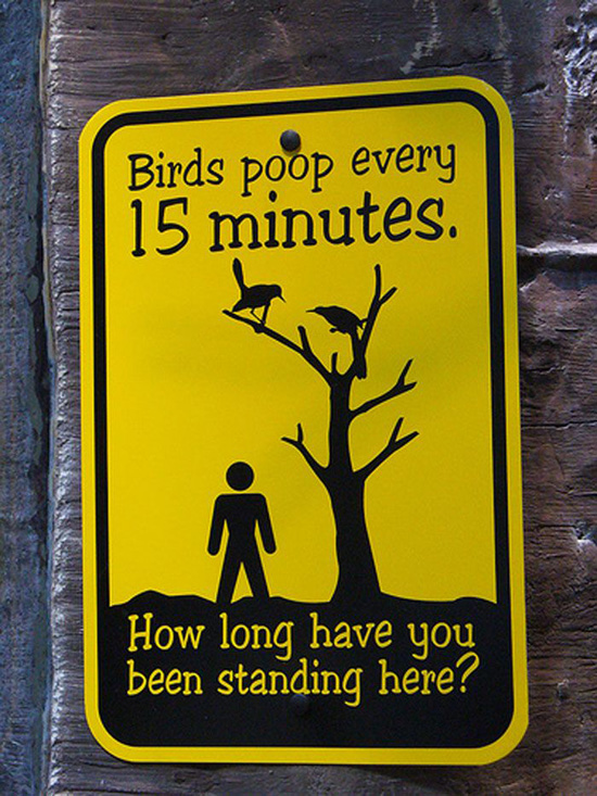 Birds poop every 15 minutes