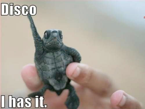 Disco: I has it!