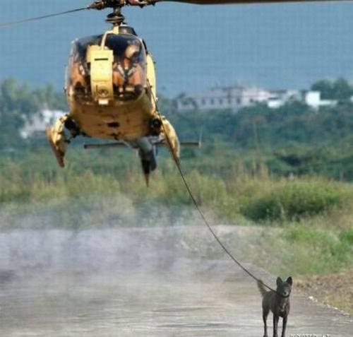 Dog walk: You're doing it wrong!
