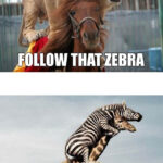 Follow that zebra!