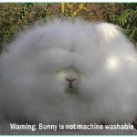 Warning: Bunnies are not machine washable!