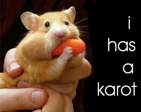 I has a Karot!