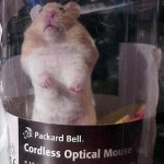 new cordless optical mouse