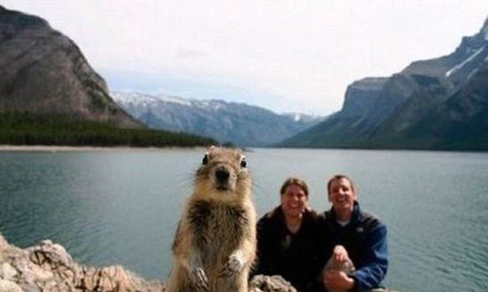 photo bombing squirrel