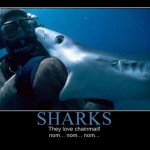 Sharks love chainmail!