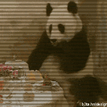 The sneezing panda and real story