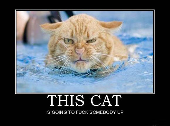 This cat...