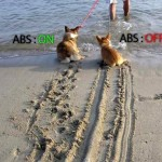 ABS explanation with just an image