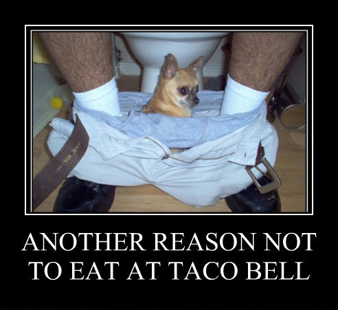 Another reason not to eat at taco bell