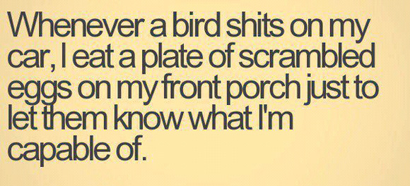 Birds taking a shit on my car...