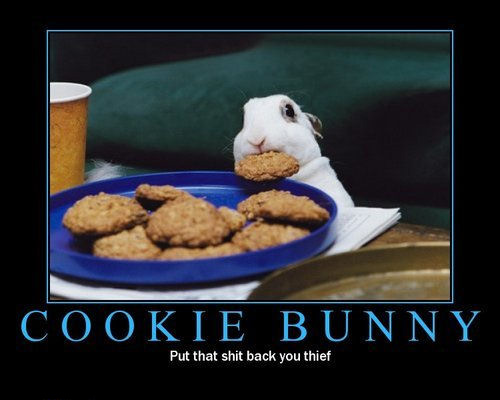 cookie bunny thief