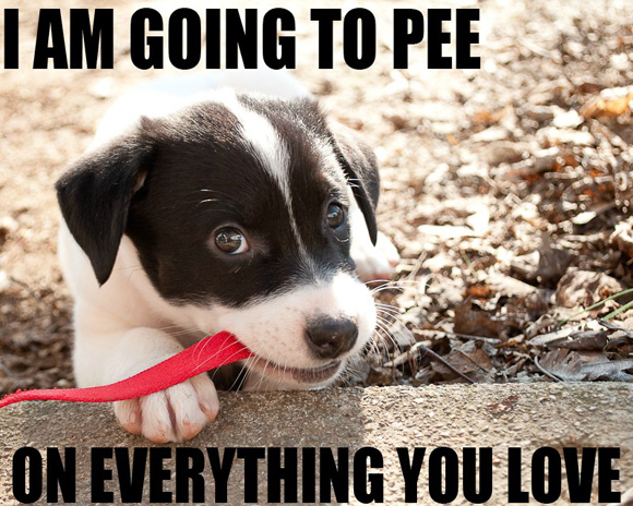 I'm going to pee...