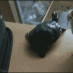 Naughty bird!