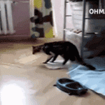 One small step for cat…