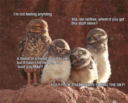 Owls on crack
