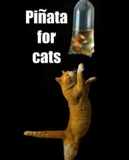 Pinata for cats!