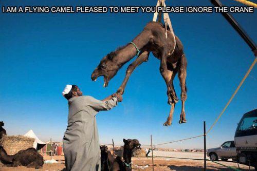 Please ignore the crane