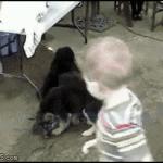 Puppy-swarm