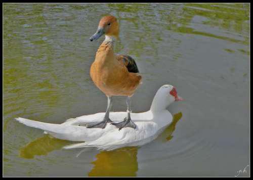 Swimming: Like a boss!