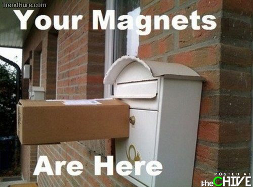 Honey! Your magnets are here!